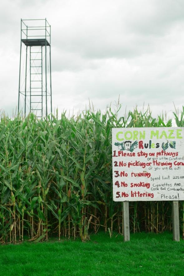 corn maze 2