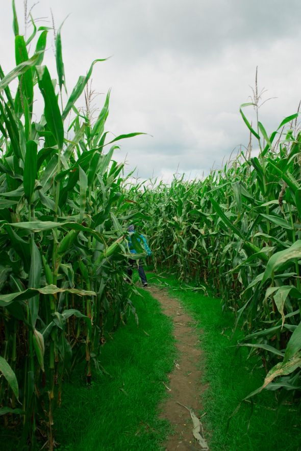 Seth in the corn maze